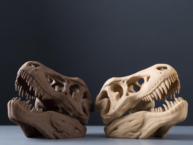 These T-Rex skulls looks fine showing a good amount of details.